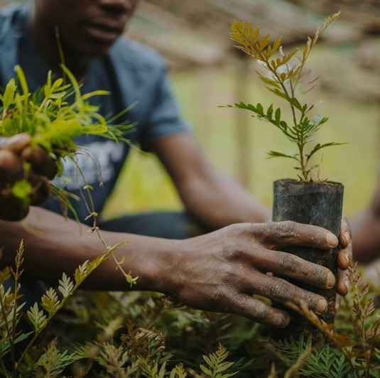 6 Pillars / Benefits of Reforestation